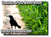 Parable of the Good Seed the Sower and the four soils